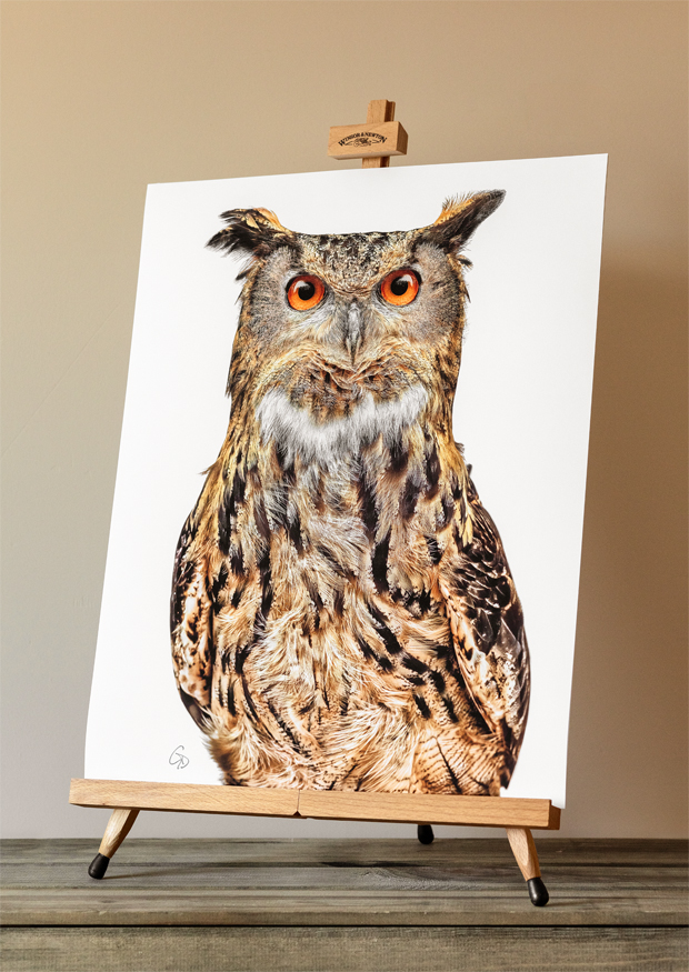 Limited edition print of an Eagle Owl